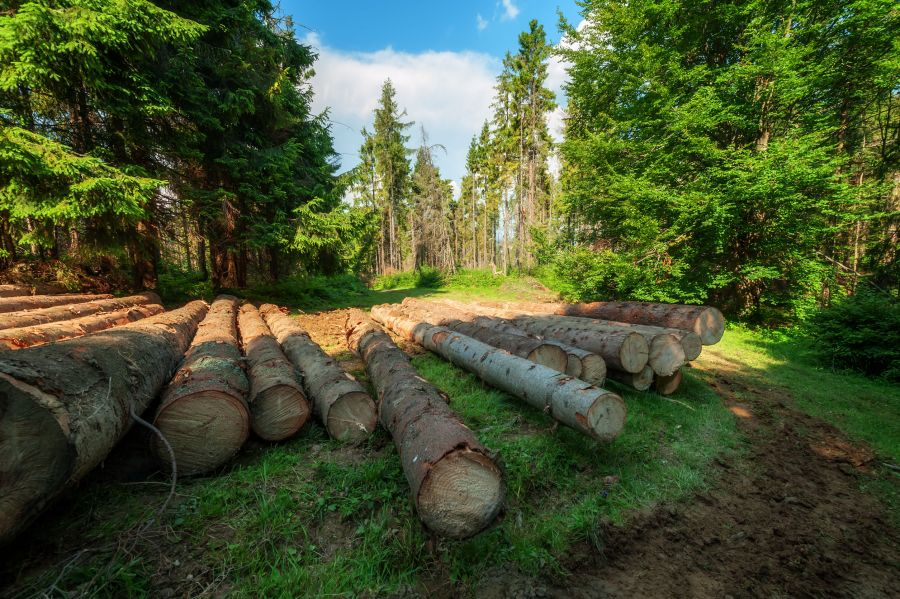 US lumber group files petition against Canadian softwood producers