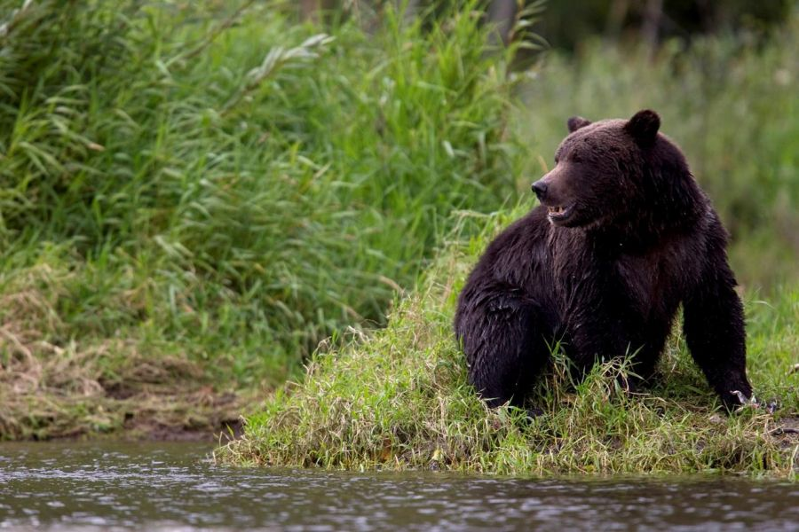 Composer killed by grizzly bear in Northwest Territories
