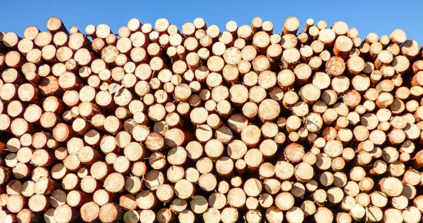 U.S.  agency rules against Canada on softwood