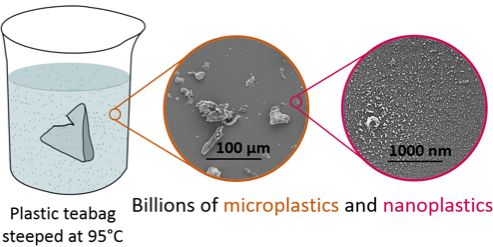 Microplastics: Premium teabags leak billions of particles