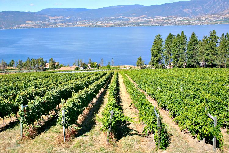 Premier stands behind boycott of BC wine