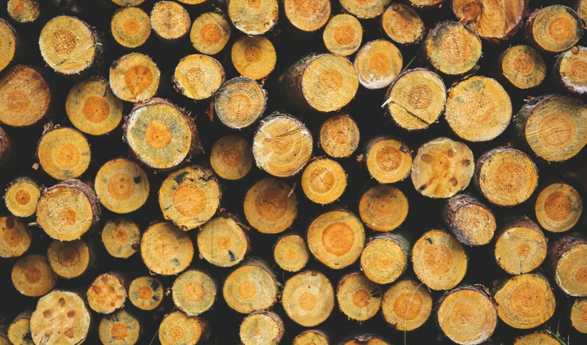 United States trade group finds Canadian softwood hurts American market