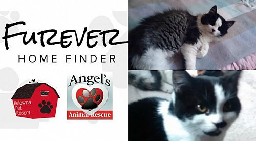 Kelowna Pet Resort Furever Home Finder: Lester and Miss Kitty