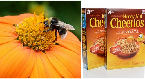 Cheerios give away over 1.5 billion seeds to save the bees