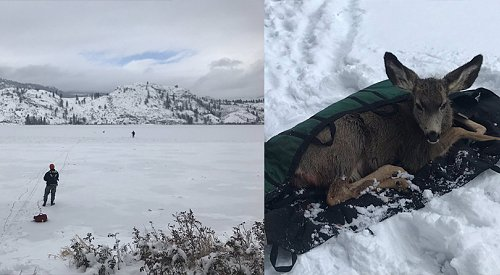 Penticton conservation officers rescue injured deer from icy Skaha Lake